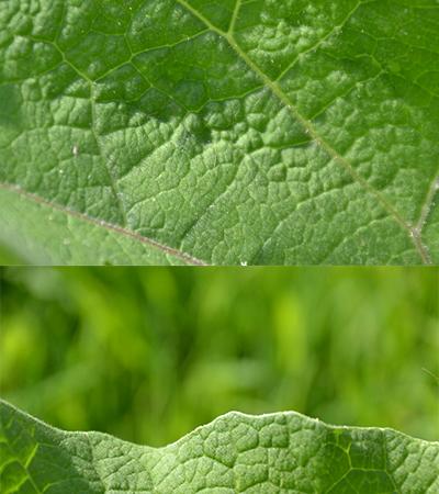 Free Leaf Textures